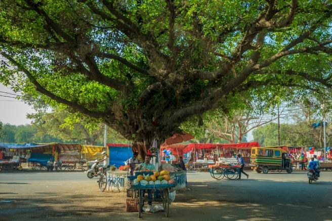 Papaya vendor and makeshift shop in backdrop